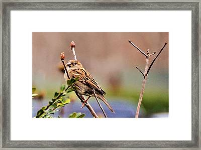 Bird In The Cold Framed Print