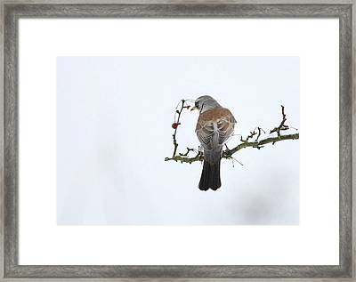 Bird In The Sky Framed Print by Heike Hultsch