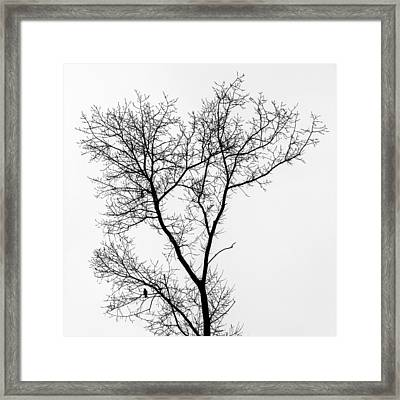 Bird In Tree Framed Print by Wim Lanclus