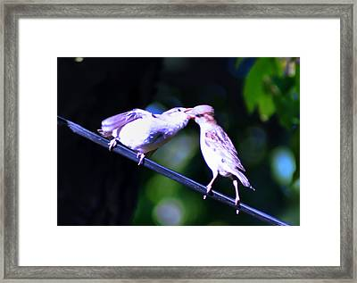 Bird Kiss Framed Print by Bill Cannon