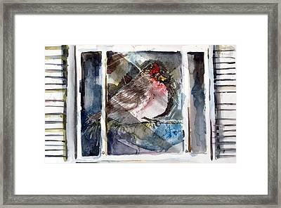 Bird Framed Print by Mindy Newman