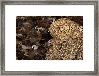 Bird Nest And Feathers Framed Print