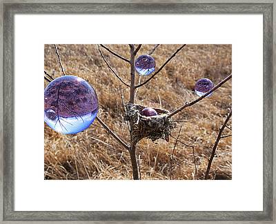 Bird Nest Visitors Framed Print by Christopher McKenzie