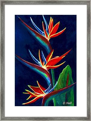 Bird Of Paradise #161 Framed Print by Donald k Hall