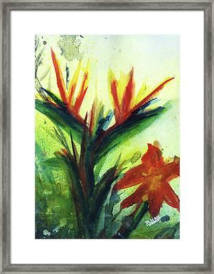 Bird Of Paradise, #177 Framed Print by Donald k Hall