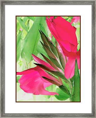 Bird Of Paradise 2 Framed Print by Jim  Darnall