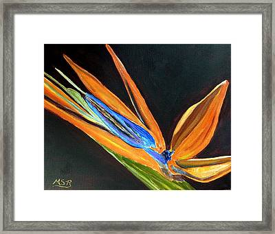Bird Of Paradise 2 Framed Print by Maria Soto Robbins