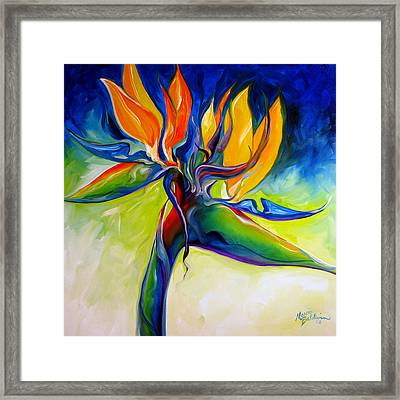 Bird Of Paradise 24 Framed Print