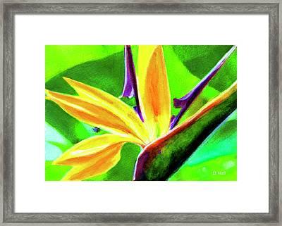 Bird Of Paradise #262 Framed Print by Donald k Hall
