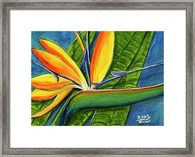 Bird Of Paradise #300b Framed Print by Donald k Hall
