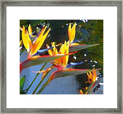 Bird Of Paradise Backlit By Sun Framed Print