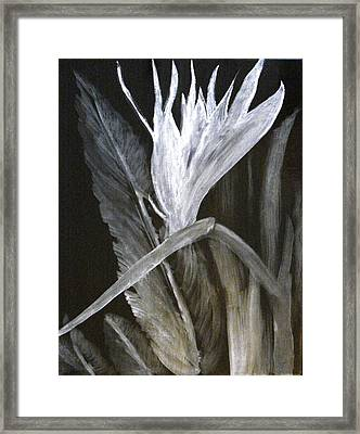 Bird Of Paradise Black And White Framed Print by Rita Tortorelli