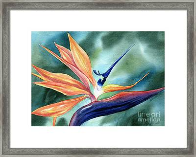 Bird Of Paradise Framed Print by Deborah Ronglien