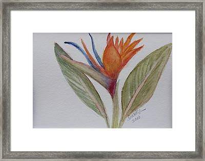 Framed Print featuring the painting Bird Of Paradise by Donna Walsh