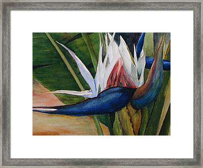 Bird Of Paradise Framed Print by Dwight Williams