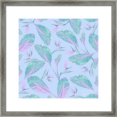 Bird Of Paradise Framed Print by Elizabeth Tuck