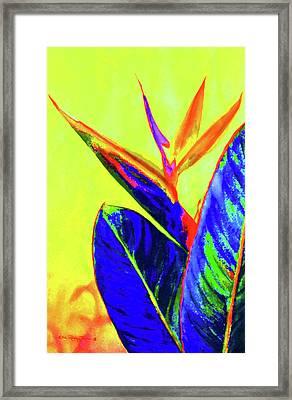 Bird Of Paradise Framed Print by Estela Robles