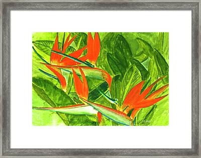 Bird Of Paradise Flower #55 Framed Print by Donald k Hall