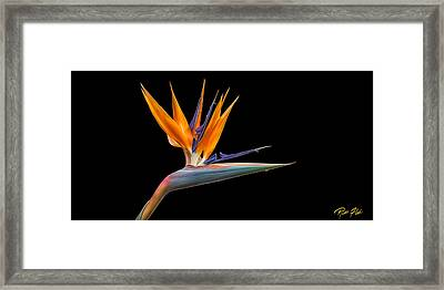 Bird Of Paradise Flower On Black Framed Print by Rikk Flohr
