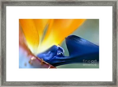 Bird-of-paradise Framed Print by Heiko Koehrer-Wagner