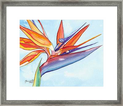 Bird Of Paradise IIi Framed Print