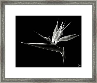 Bird Of Paradise In Black And White Framed Print