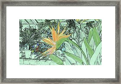 Framed Print featuring the photograph Bird Of Paradise In The Hothouse by Nareeta Martin
