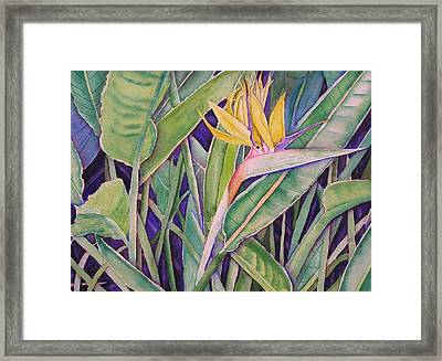 Bird Of Paradise Framed Print by Laurie Balla
