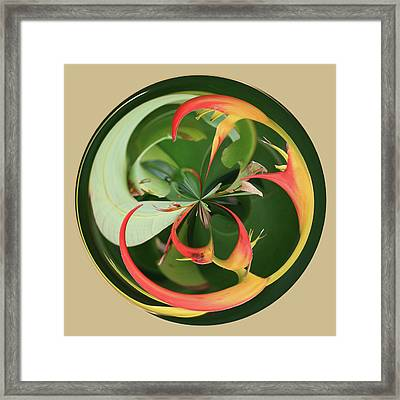 Framed Print featuring the photograph Bird Of Paradise Orb by Bill Barber