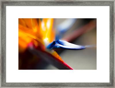Bird Of Paradise Framed Print by Ralf Kaiser