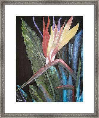 Bird Of Paradise Framed Print by Rita Tortorelli