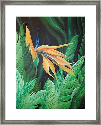 Bird Of Paradise Framed Print