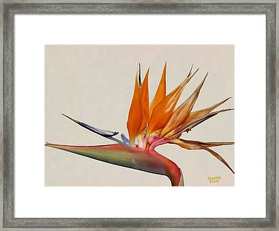 Bird Of Paradise With White Background Framed Print
