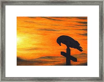 Bird Of Pray Framed Print by Don McMahon