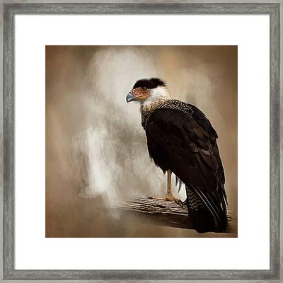 Bird Of Prey Framed Print by Cyndy Doty
