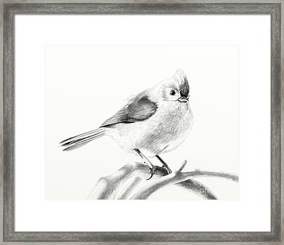 Framed Print featuring the drawing Bird On A Branch by Eleonora Perlic