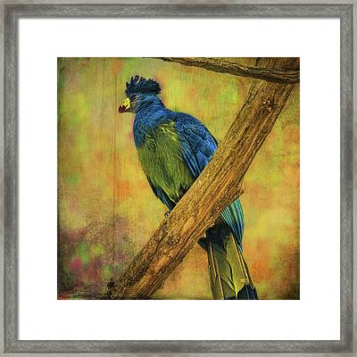 Framed Print featuring the photograph Bird On A Branch by Lewis Mann
