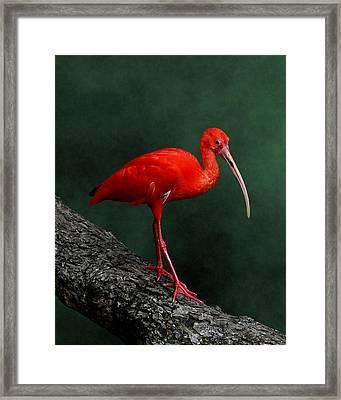 Bird On A Catwalk Framed Print