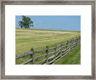 Bird On A Fence Framed Print by Donald C Morgan