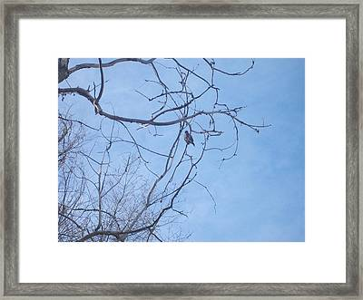 Framed Print featuring the photograph Bird On A Limb by Jewel Hengen