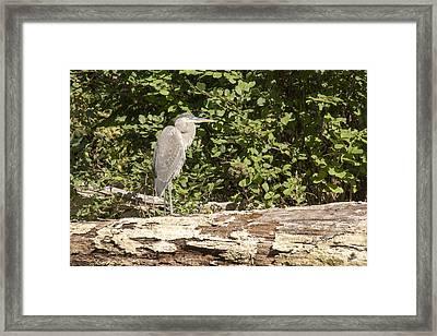Bird On A Log Framed Print by Ricky Dean