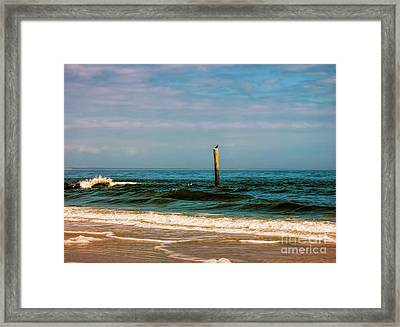 Bird On A Pole Framed Print