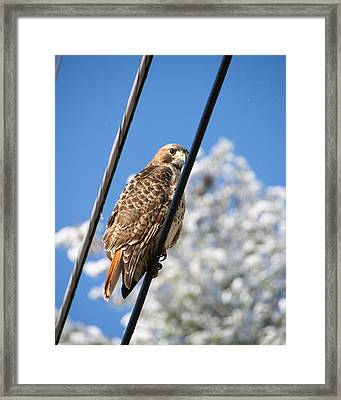 Bird On A Wire Framed Print by Edward Myers