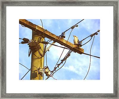 Bird On A Wire Framed Print by Evguenia Men