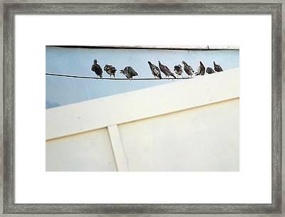 Bird On A Wire Framed Print by Jez C Self