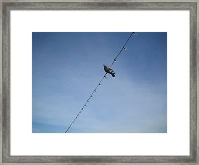 Bird On A Wire Framed Print by Tiara Moske