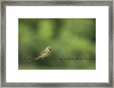 Framed Print featuring the photograph Bird On Barbed Wire by Scott Bean