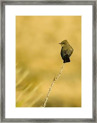 Bird On Ocotillo Framed Print by Clyde Replogle
