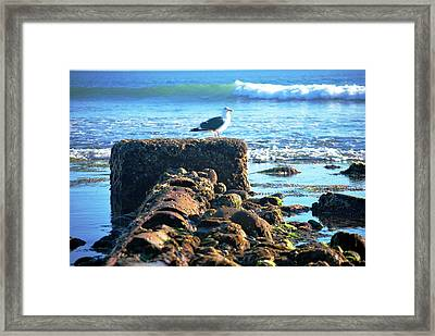 Bird On Perch At Beach Framed Print
