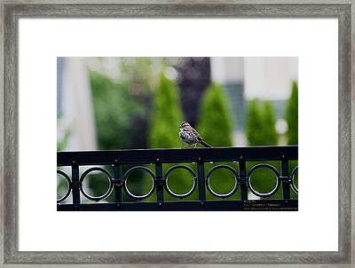 Bird On The Fence Framed Print